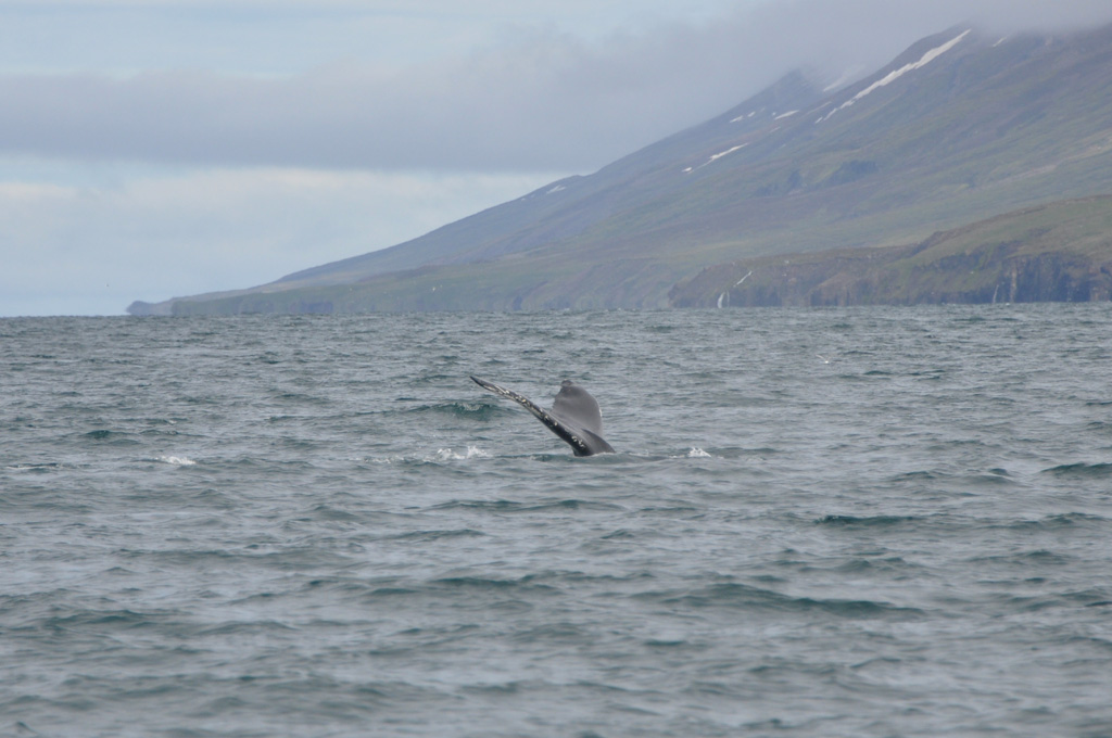 Iceland, the whalewaters – day 7 (1)