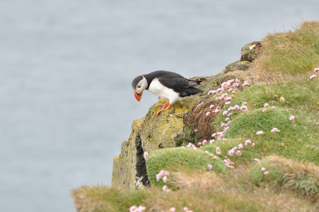 Iceland, the Puffin – day 10 (2)